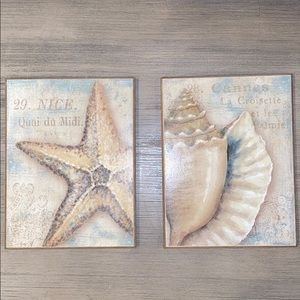 Shell & Starfish Pictures